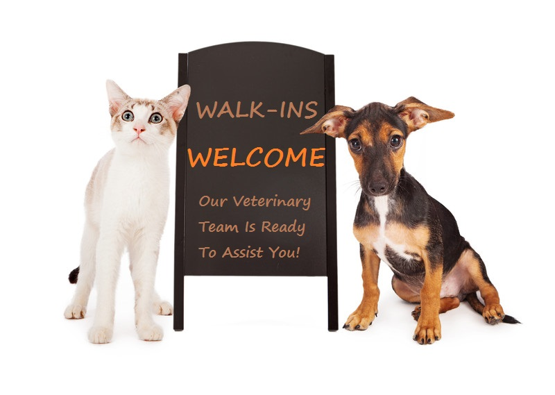 Quality Veterinarian in Kelowna. Visit our Vet today!