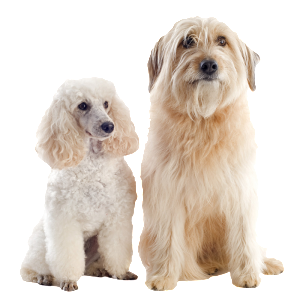 2 dogs_transparent