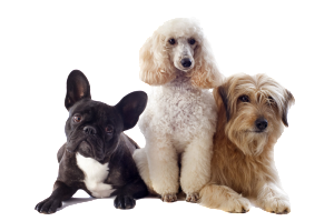 Pet Boarding in Kelowna, BC, from Asher Road Animal Hospital