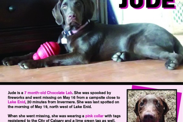A lost dog poster for a chocolate Labrador named Jude